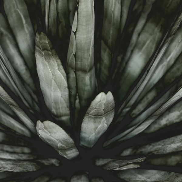 The Secret Life Of Plants by Carsten Witte, via Behance