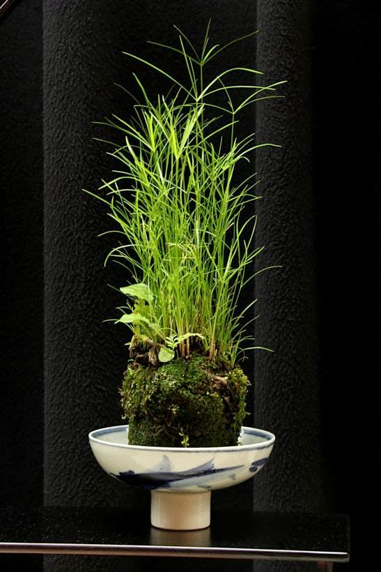 Gardens By Maria: 297 Best Images About Kokedama