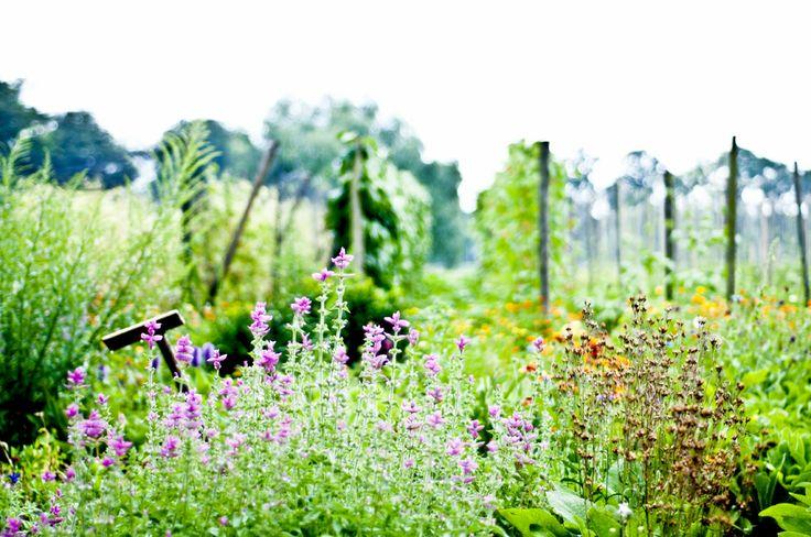 Deze zomer heb ik vrijwilligerswerk gedaan bij Amelis'hof op landgoed Amelisweerd. Nu ga ik met drie andere tuinmeisjes een moestuin opbouwen. Tof!