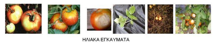 http://fytologion.blogspot.gr/p/blog-page_11.html