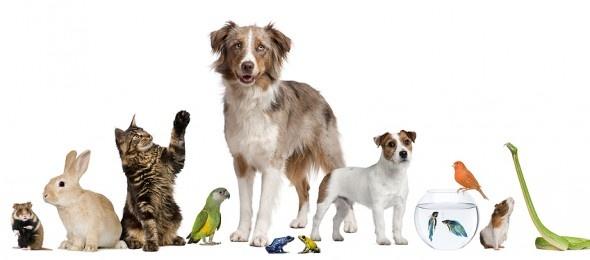 È necessario prima di mettersi in viaggio con il proprio animale domestico informarsi attentamente  sulle varie regolamentazioni previste in materia sanitaria dai diversi paesi, considerando anche le patologie più a rischio per ogni zona.    http://www.petsparadise.it/altri/regolamentazione-sanitaria-per-una-vacanza-con-gli-animali/