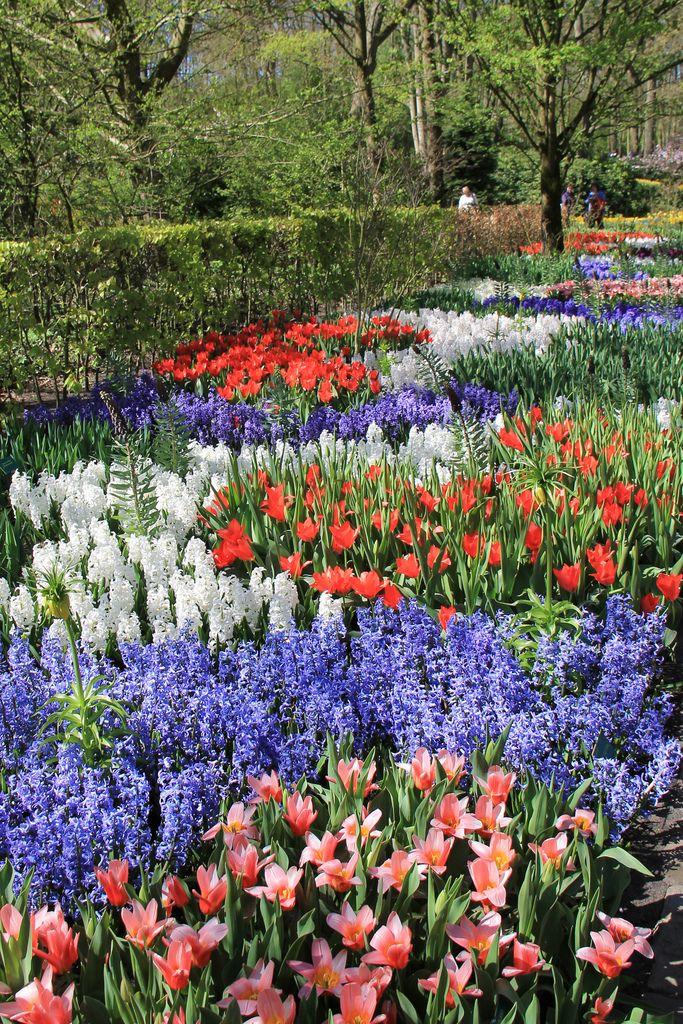 Keukenhof Gardens, Holland | by rosinberg