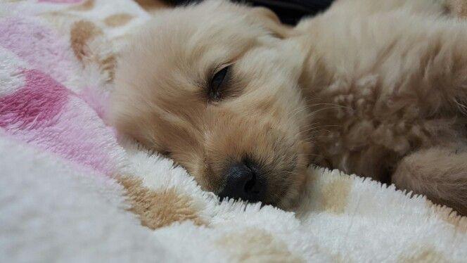 Duermo mucho !!!