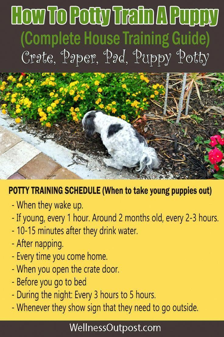 Sincere Suggested Dog Training Techniques Puppy Potty Training