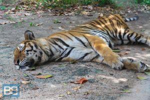 The Phnom Tamao Wildlife Rescue Center, Cambodia