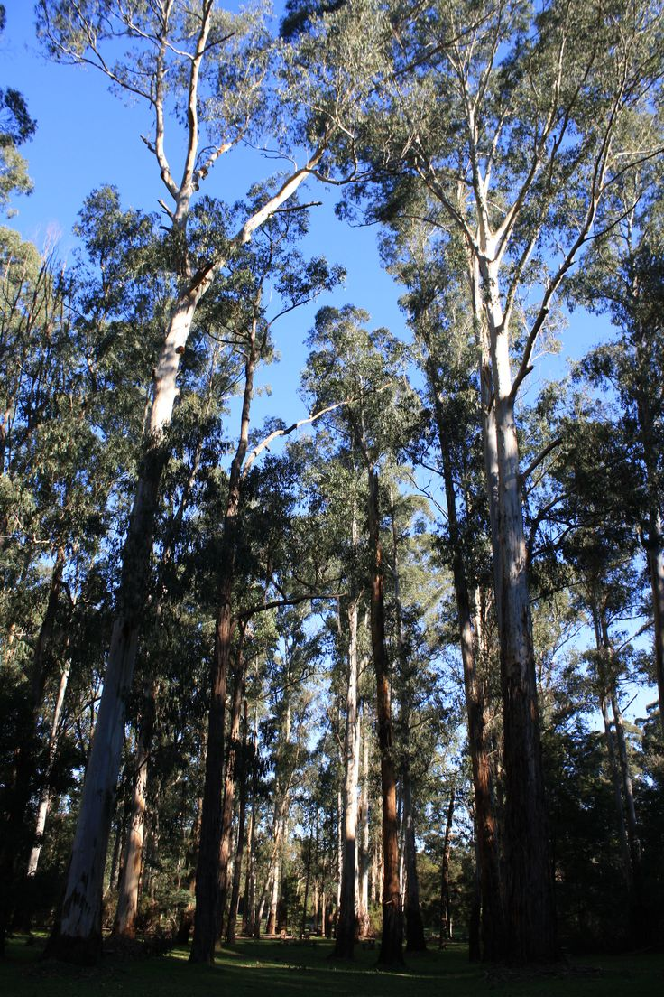 Tall trees in one of the picnic areas