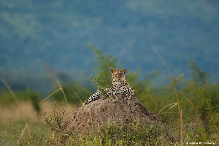 Ruckomechi Camp #ManaPools #Zimbabwe #safari