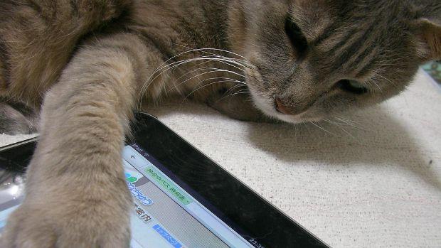 Aplicativos de jogos para gatos que gostam de ratos virtuais - Vida Digital - Notícia - VEJA.com