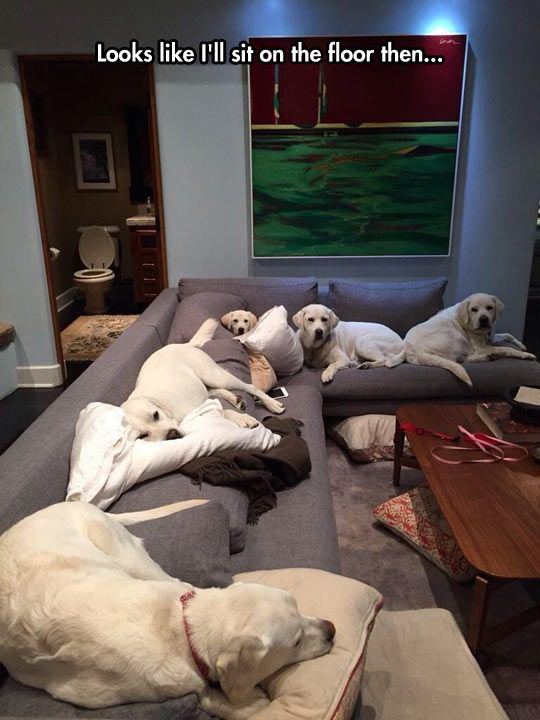 No dogs on the furniture http://ift.tt/2d8KakC