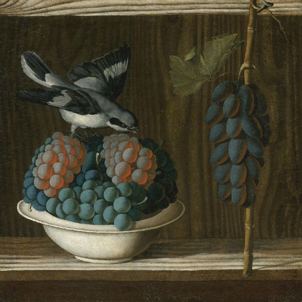 Antonio Leonelli da Crevalcore (c. 1438-41-post 1515), Still life with a Gray Shrike, or Allegory of Painting (presumably a reference to Pliny's anecdote about Zeuxis painting grapes so realistically that birds flew down to peck them)