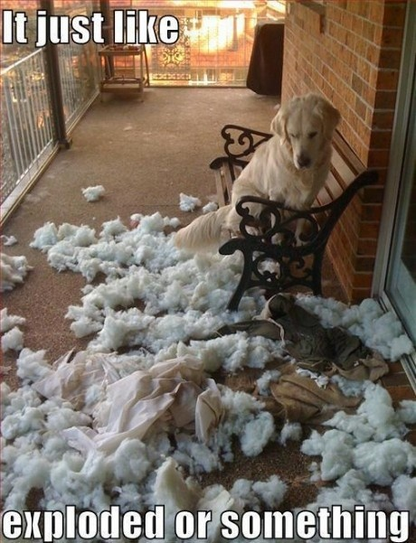 It just like, exploded everywhere, dog, pillow, fluff: Dogs Beds, Funny Dogs, Pet, Funny Stuff, House, Funny Animal, So Funny, Pillows Pop, Golden Retriever