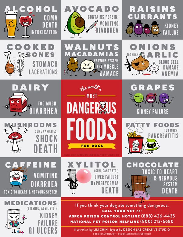 The World's Most Dangerous Foods for Dogs: Alchohol, Avocado, Raisin, Currants, Cooked Bones, Walnuts, Macadamias, Onions and Garlic, Dairy, Mushrooms, Caffeine, Medications, Grapes, Fatty Foods, Xylitol, Chocolate