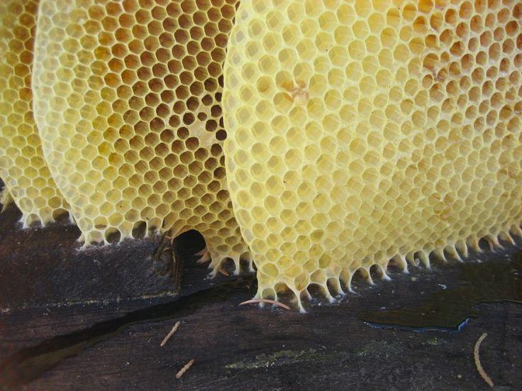 honey-1340050_960_720