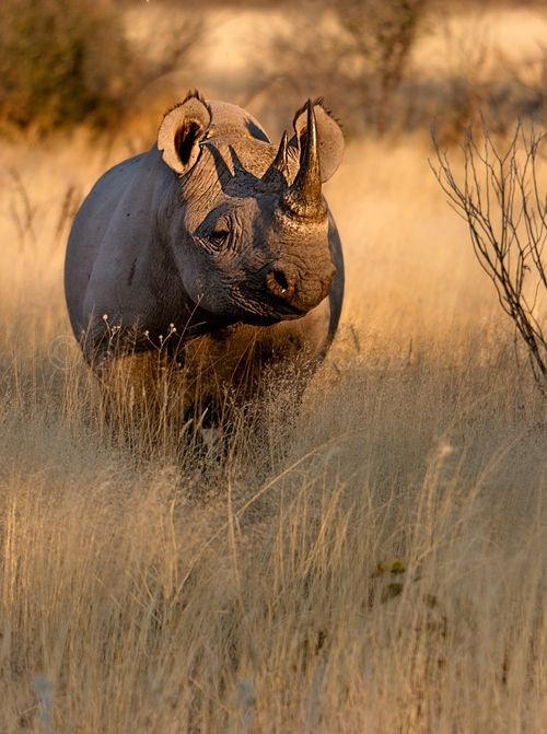 When you volunteer with Via Volunteers, you will have the chance to see how beautiful South Africa is! Black Rhino
