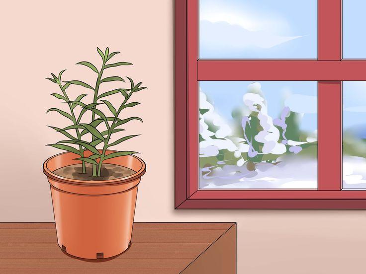 Je eigen gemberplant kweken is niet alleen gemakkelijk, maar je krijgt er ook veel voor terug. Wanneer je de gember geplant hebt, heeft deze slechts water en geduld nodig om uit te groeien tot een heerlijk en kruidig ingrediënt om mee te ...