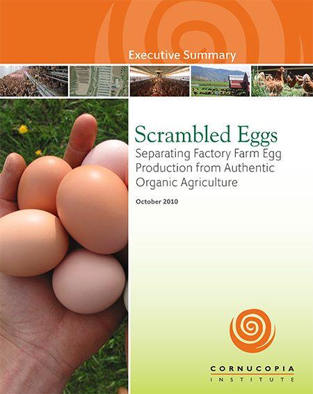 Organic Egg Report and Scorecard, animal welfare, animal cruelty, factory farming, health, food safety, food, chickens, hens, eggs