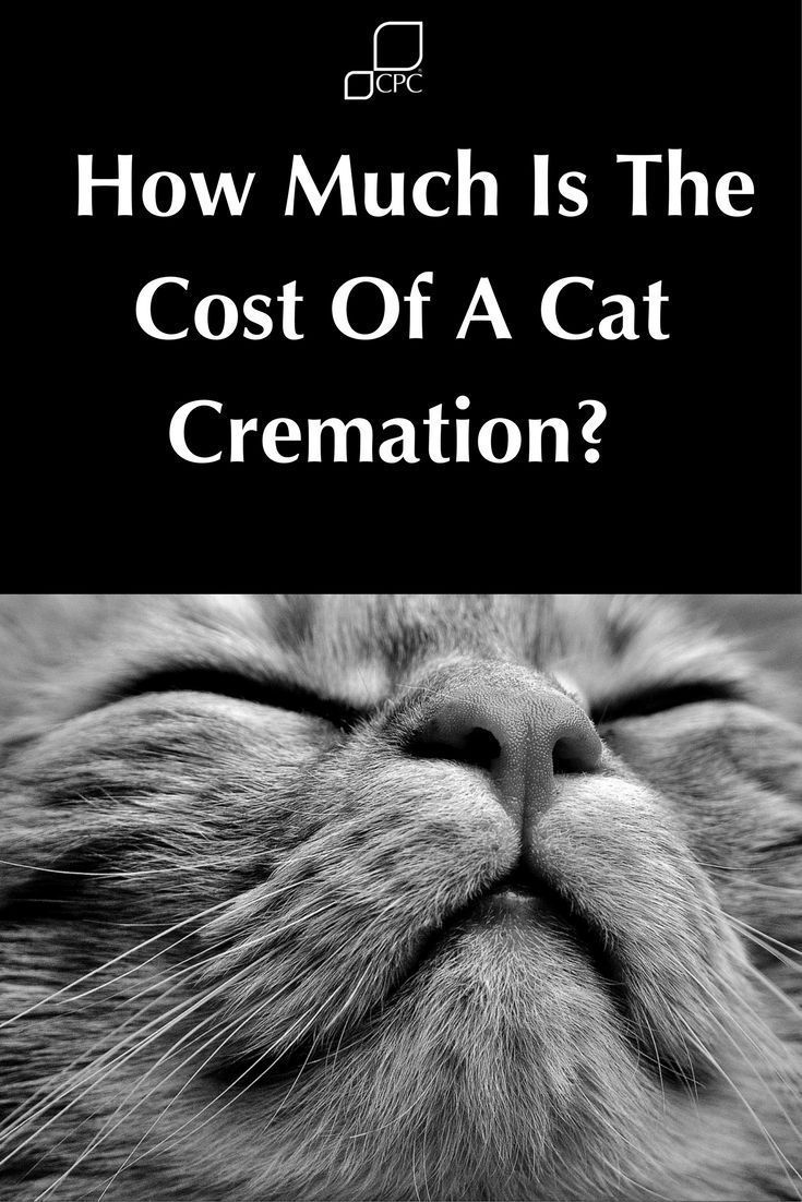 How much does an individual cat cremation cost cpc