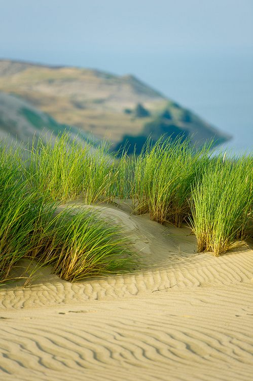 **Green grass, sand beach nature  (Source: Flickr / swapartment, via turningpoint2)