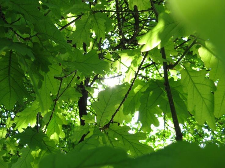 Lugar: Las Condes, Región Metropolitana   Fecha: Mayo 2011   Cámara: Canon Powershot A720 is