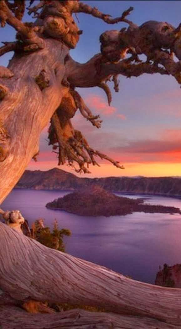 Crater Lake, Oregon. But it's the tree and the way light brings it out of this shot that makes this one.