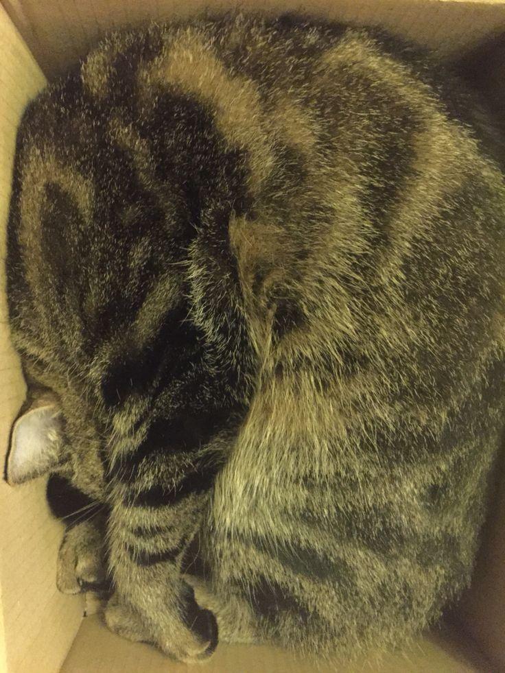 Zodra hij een doos ziet, gaat hij erin liggen.   kat   Pinterest