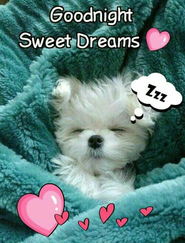 Goodnight Sweet Dreams My Friend Goodnight Good