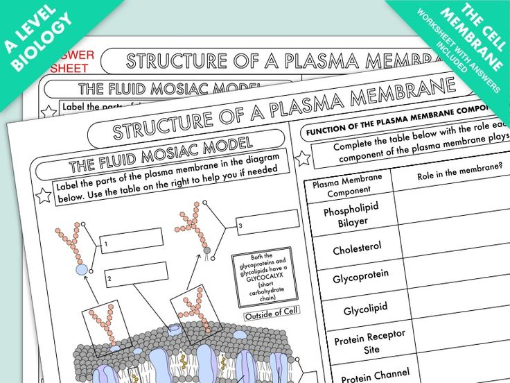 A Level Biology Cell Membrane Structure Worksheet in 2020