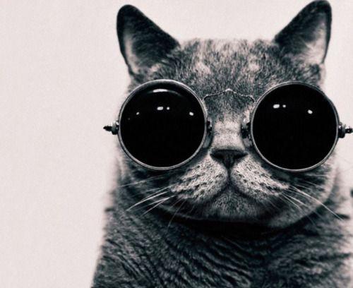 Photos, Hipster Cat, Cool Cat, Kitty Cat, Cat Eye, Glasses, Funny Cat, John Lennon, Animal
