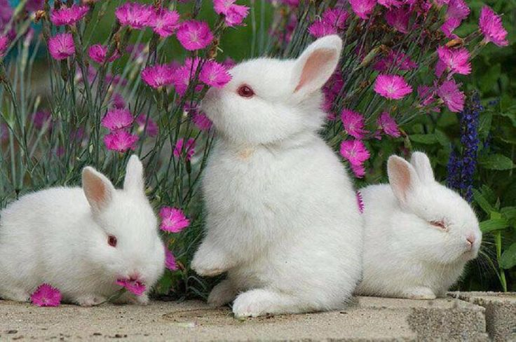 bunnies and flowers....