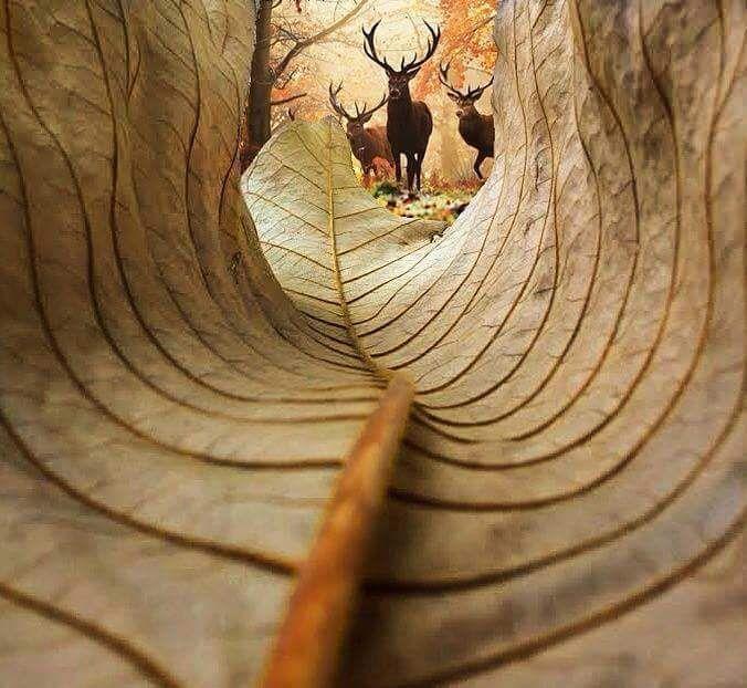 """""""La vista da dentro una foglia"""" © kobi refaeli #natura #foto #autunno"""
