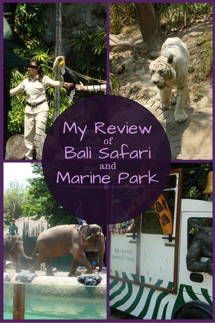 My review of bali safari and marine park from our family day trip
