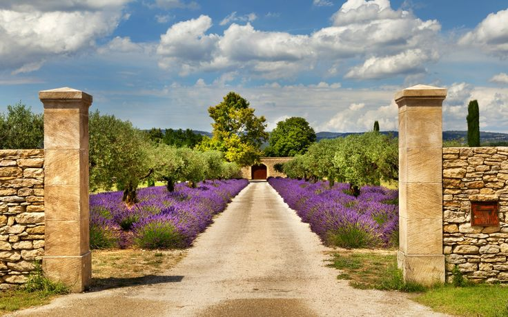Скачать обои Франция, сад, дорога, ворота, деревья, лаванда, забор, Provence, небо, облака, раздел природа в разрешении 1680x1050