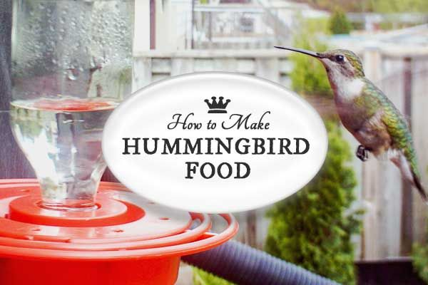 Hummingbirds are sweet, curious, and fiesty visitors in the garden but did you know you can unknowingly poison or kill them by providing the wrong nectar or neglecting the feeder? Learn how to make hummingbird sugar water that matches their natural diet and choose the best style of feeder.