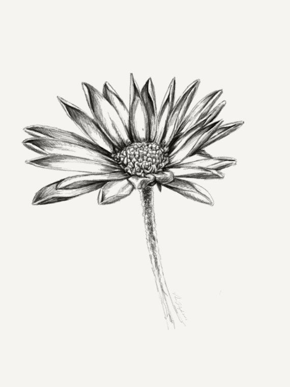 Printable Daisy Wall Art Black And White Flower Drawing Nature Room Decor Gift For Her How To Draw Hands Watercolor Daisy Tattoo Daisy Drawing