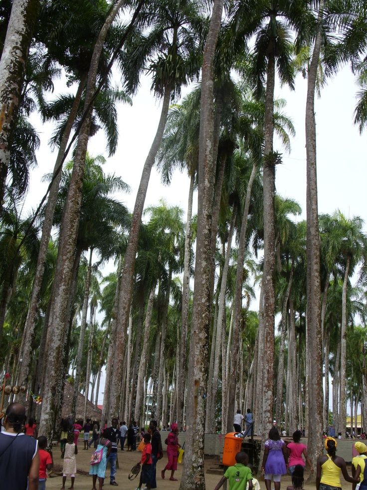 Palmentuin, Suriname