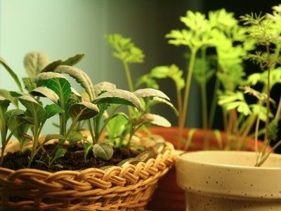 Container vegetable gardening can provide fresh homegrown produce in small spaces
