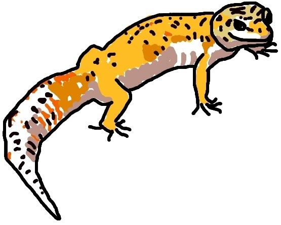 leopard gecko drawing