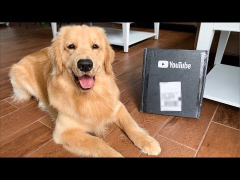 Live Unboxing Youtube Play Button Youtube Animals Beautiful