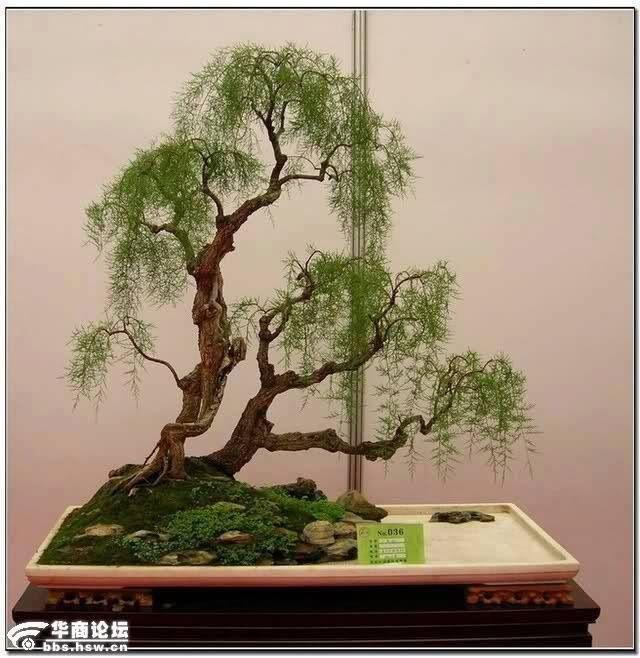 How to make a bonsai tree - YouTube
