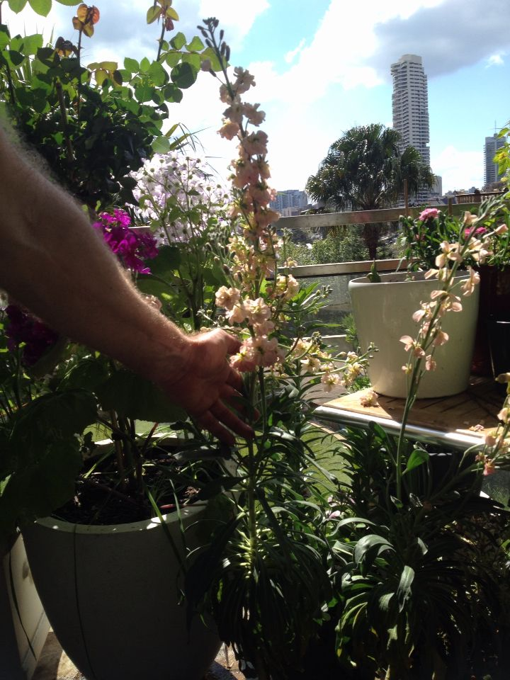 22 best winter flowering fragrance images on pinterest - Winter flowers for balcony ...