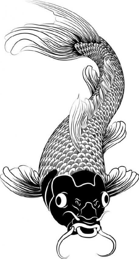 how to draw a koi fish in water
