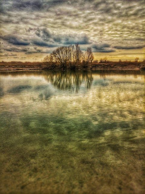 Claes`s Photo blog: looking at trees