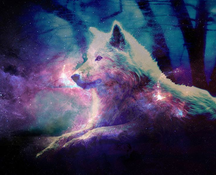 WallpaperSafari Wolf Galaxy