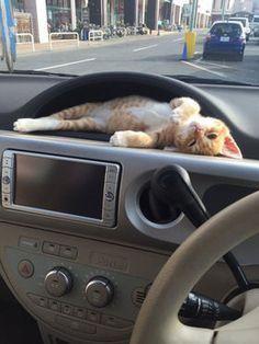 Cute Orange tabby kitten chillin in the car