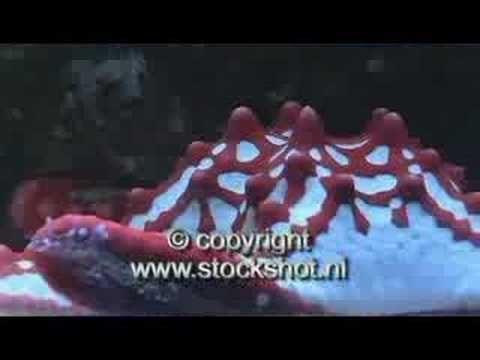 lagune aquarium - YouTube