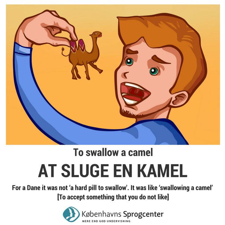 To swallow a camel - Danish idioms
