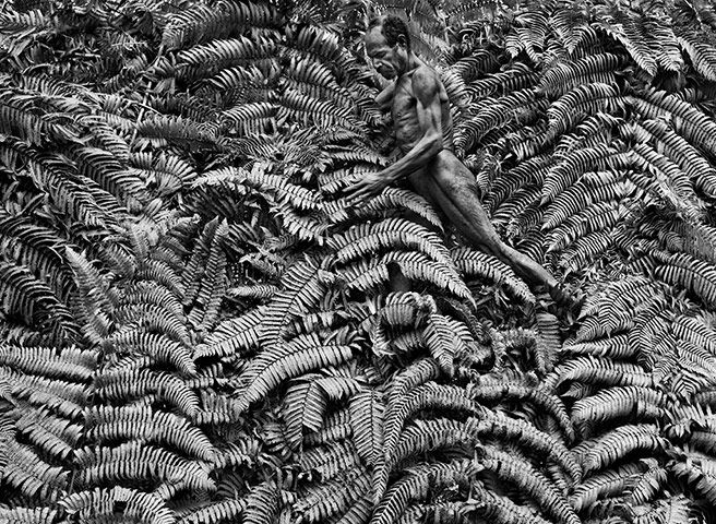 A Yali man in the Jayawijaya mountains of Irian Jaya, West Papua