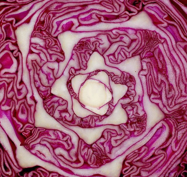 Frame different high quality photos of veggies and fruits and put then in the kitchen. fibonacci in nature