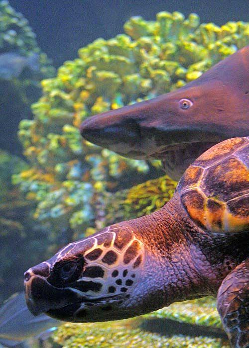 Tartaruga e squalo pronti alla partenza. Favorita la tartaruga