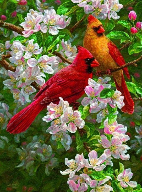Cardinals by artist BETH HOSELTON.                                                                                                                                                                                 Plus